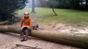 Arborist Peter Hart Tree Surgeon