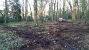 Woodland clearance work with a bobcat and mulching head in Dorset