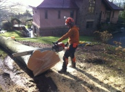 Cross cutting a large beech for firewood with the MS088
