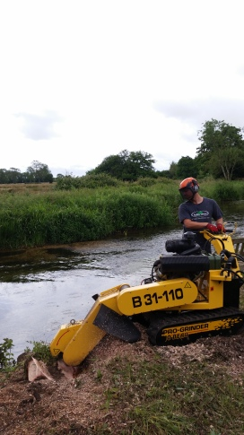 Removing stumps as part of a riverbank restoration project
