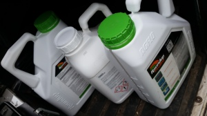 Roundup used for chemical weeding of Rhododendron