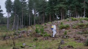Chemical weeding plantations for the Forestry Commission in Wareham, Dorset