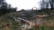 Ash felling for regeneration in Coulsdon - City of London project