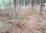 Effective chemical weeding for the Forestry Commission
