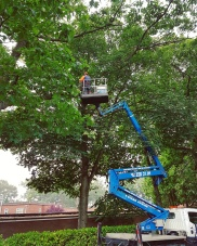 Tree access using a MEWP