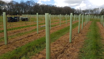 Tubing and staking trees